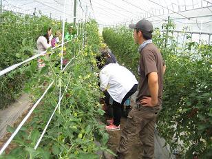 農業体験 (3)
