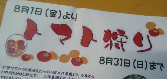 ミニトマト狩り