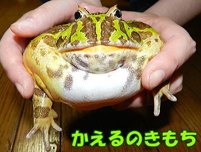 kaerunokmochi20140321001.jpg