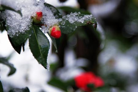 城崎温泉 積雪情報 「これが最後の雪景色に…」