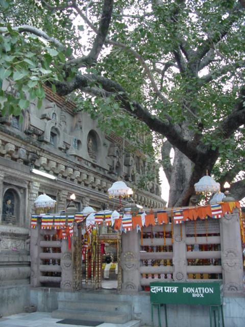 金剛宝座と菩提樹