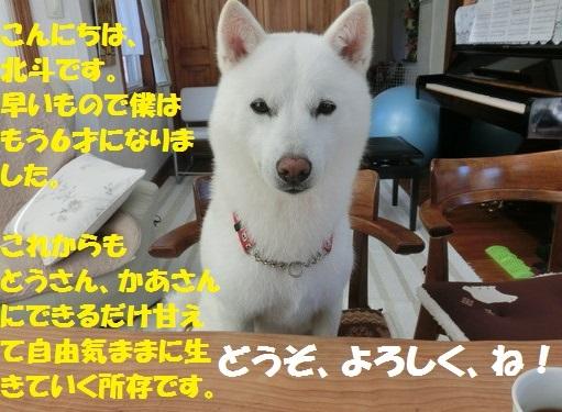 CIMG0367.jpg