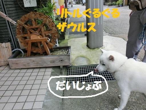 CIMG9162.jpg