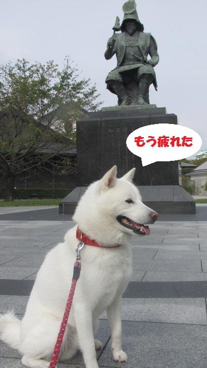 IMG_3406.jpg