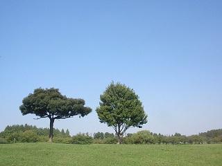 小気になる木