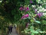 向島百花園の萩