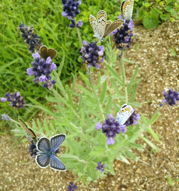 蝶にとってここが安住の地な ...