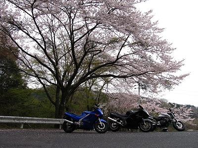 帰り道の桜1