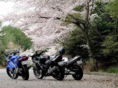 帰り道の桜2
