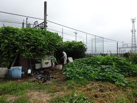 駒畠さんの畑1
