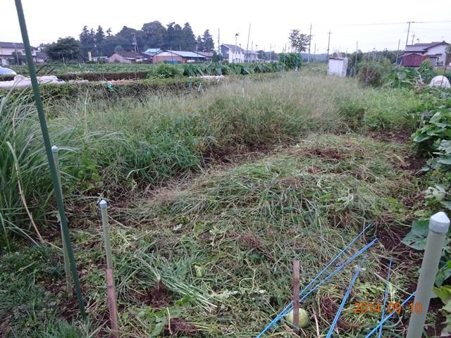片づけ途中のスイカ畑