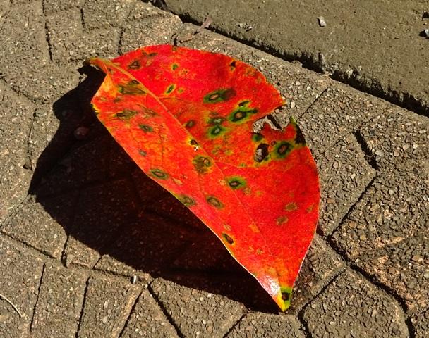 柿の紅葉2