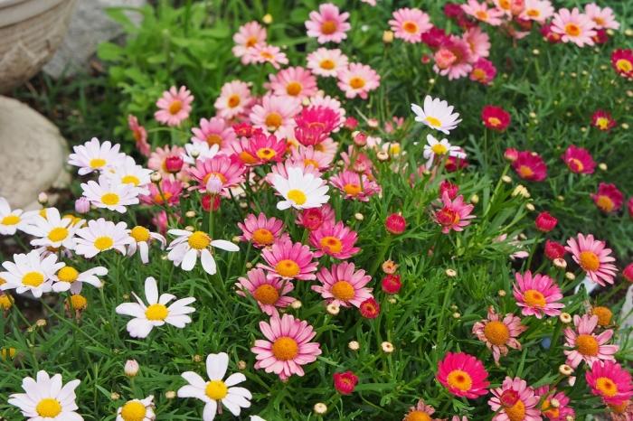 農園に咲く花  2