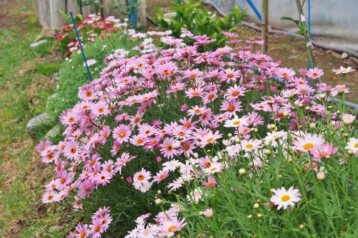 農園に咲く花