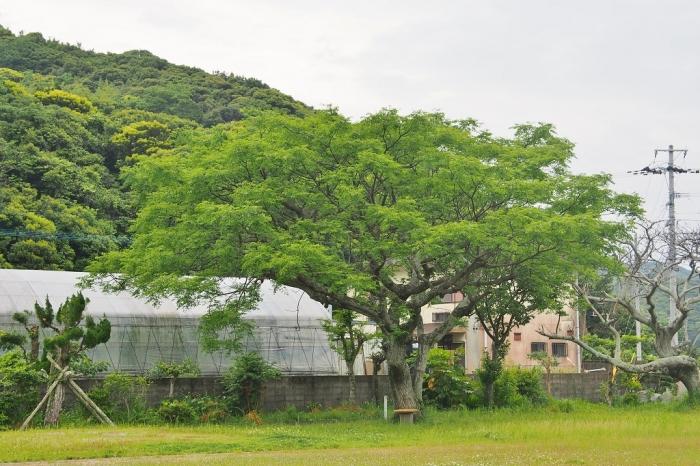 浦内小学校とパッションハウス
