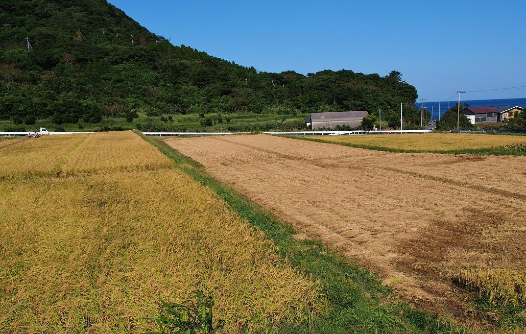 稲刈り 1