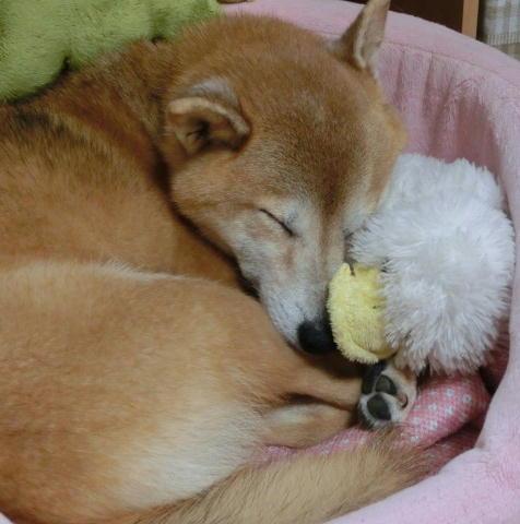 寝るコロ 2