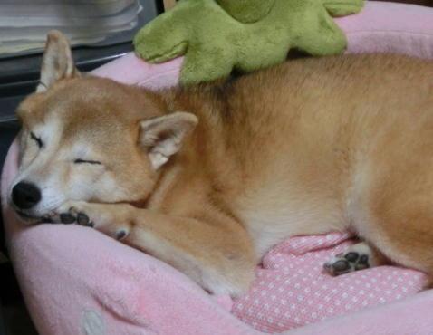 優しい寝顔