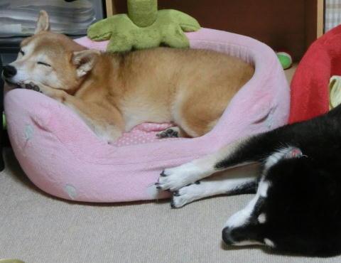 お昼寝タイム