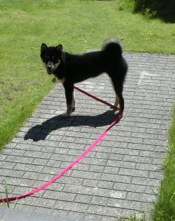 外犬希望 マロ