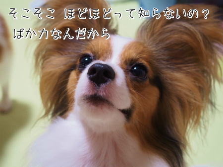 かえ注意2