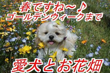 お花畑に行こう♪