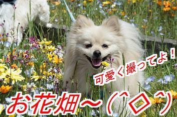 hanabani.jpg