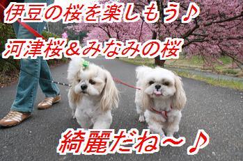 kawadu_2014021703374090f.jpg