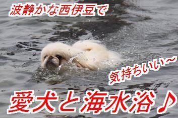 umimiro1.jpg