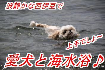 楽しい夏休み~♪