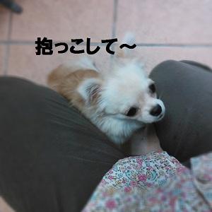 20140813131011161.jpg