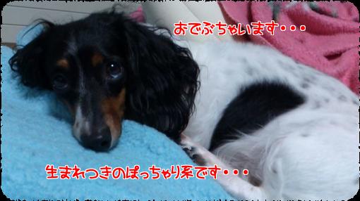 X_zUGEPoIignOsf1404478751_1404479188.png