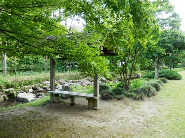 momijidani20140610d