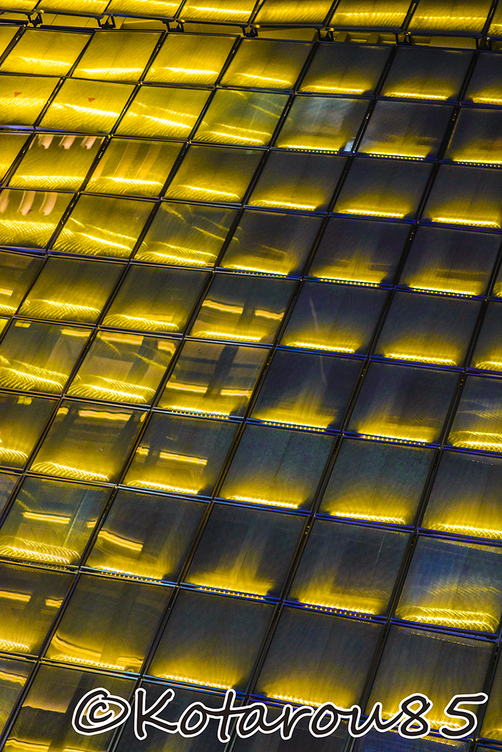 黄金の壁 20140825
