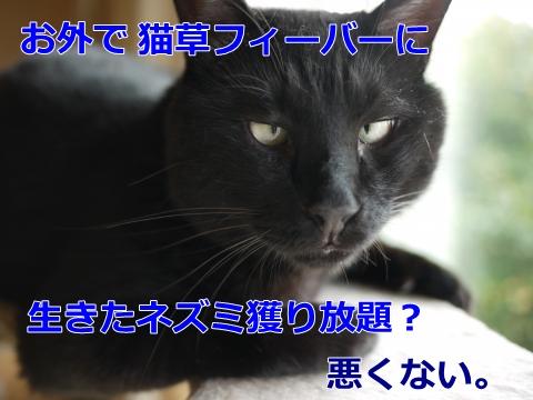 007_convert_20140915222656.jpg
