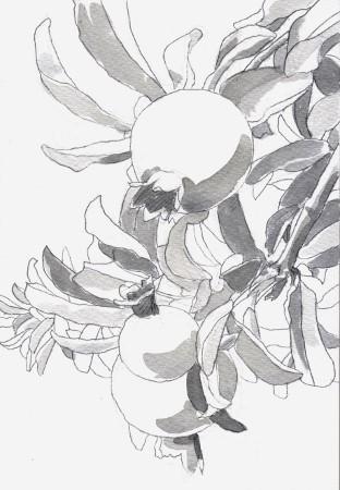 ざくろ2 グリザイユ (312x450)