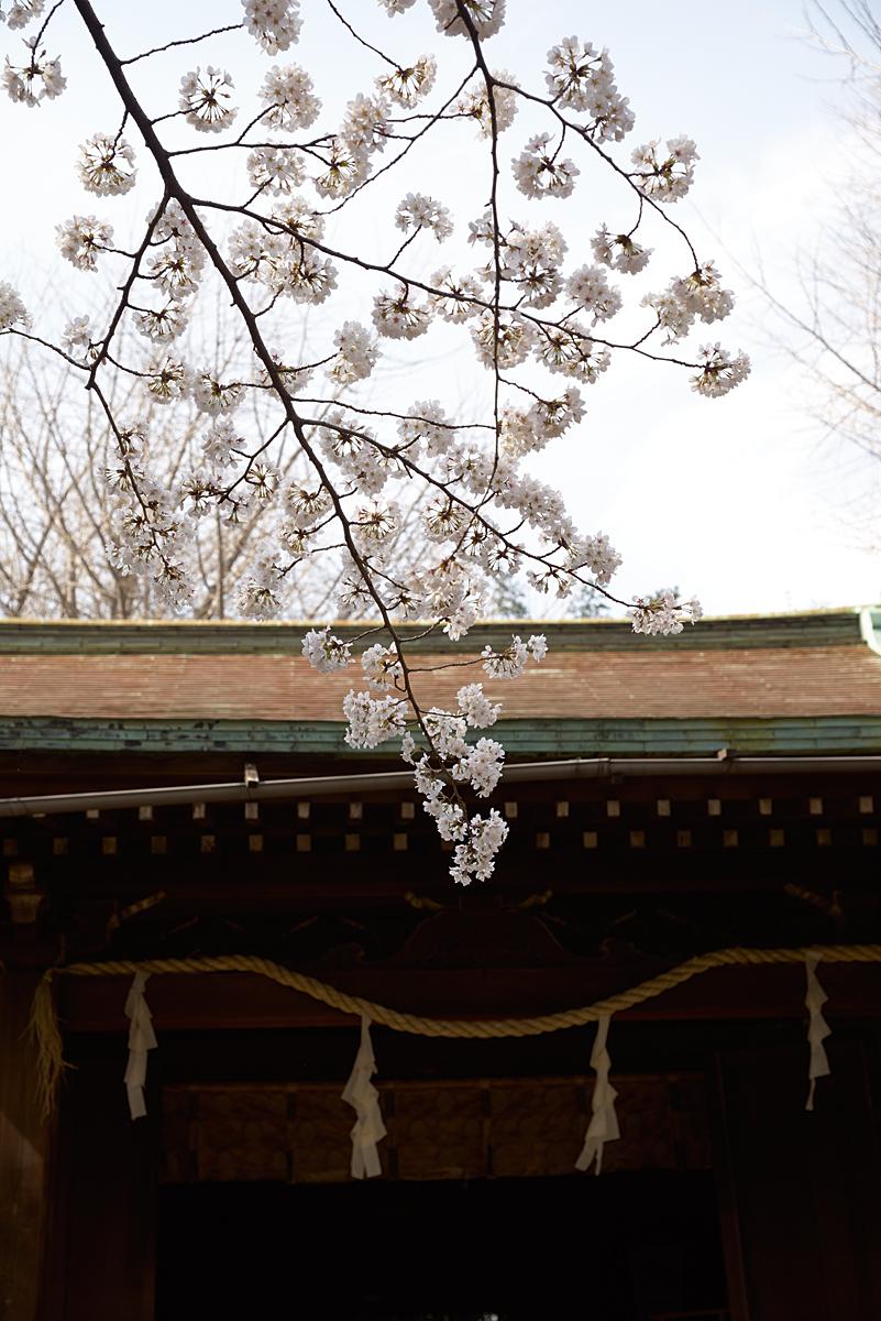西日暮里駅近くの諏方神社にて