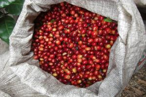 red+cherry_convert_20120823081446.jpg