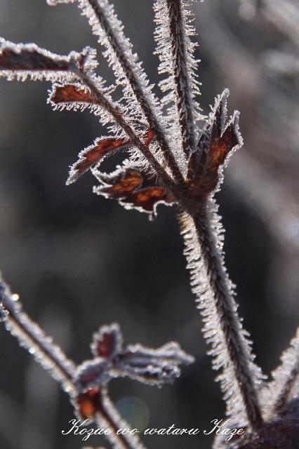 冬の情景12