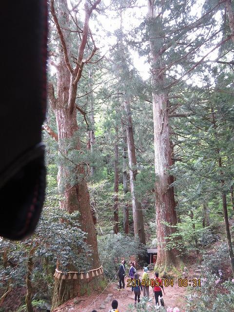 三徳山三仏寺です。大杉があります。