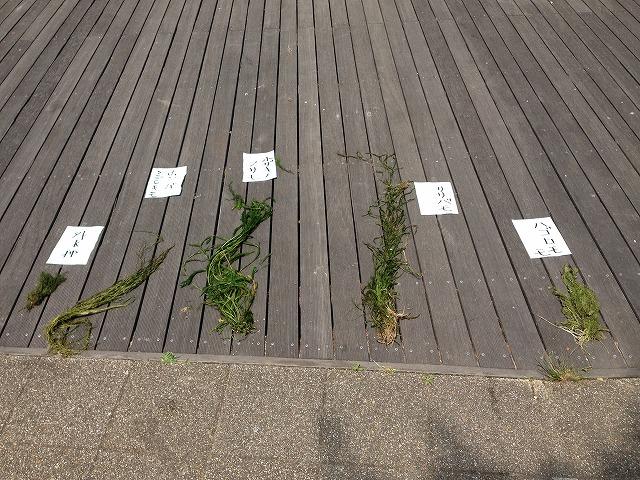 IMG_1355●藻類が5種類でした