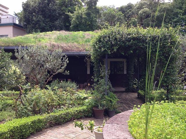 IMG_2821屋上緑化のハウスは残る予定です
