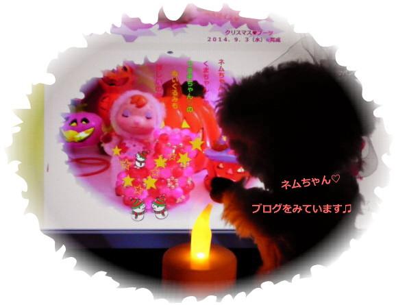 花ブ20140913-1