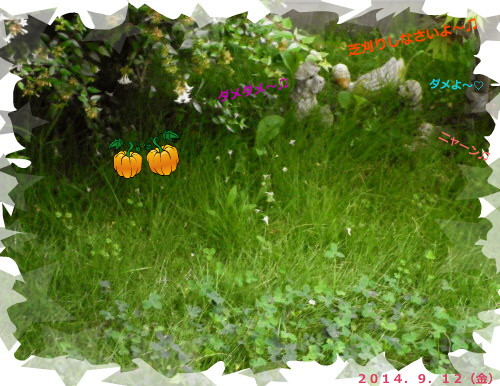 花ブ20140913-2