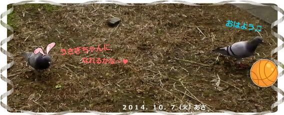 花ブ20141007-1