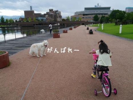 20140811_04.jpg
