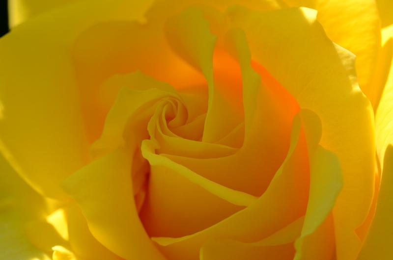 20140511 rose9