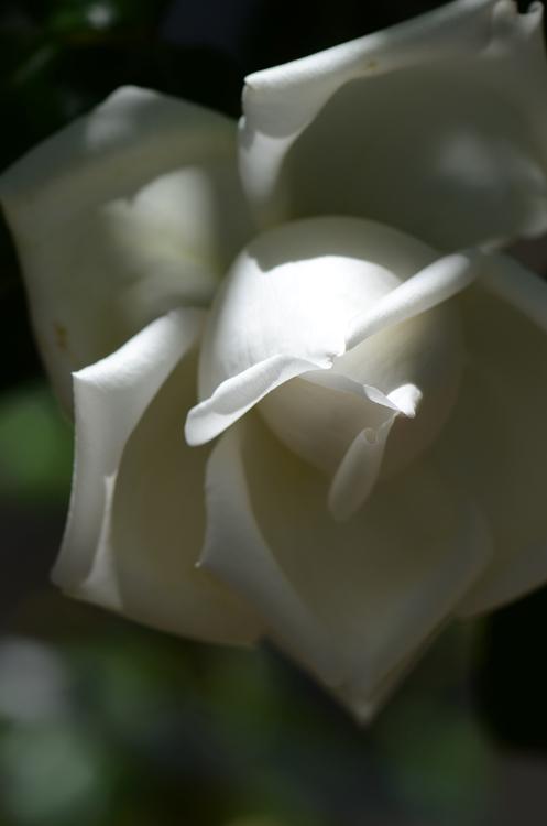 20140511 roze12