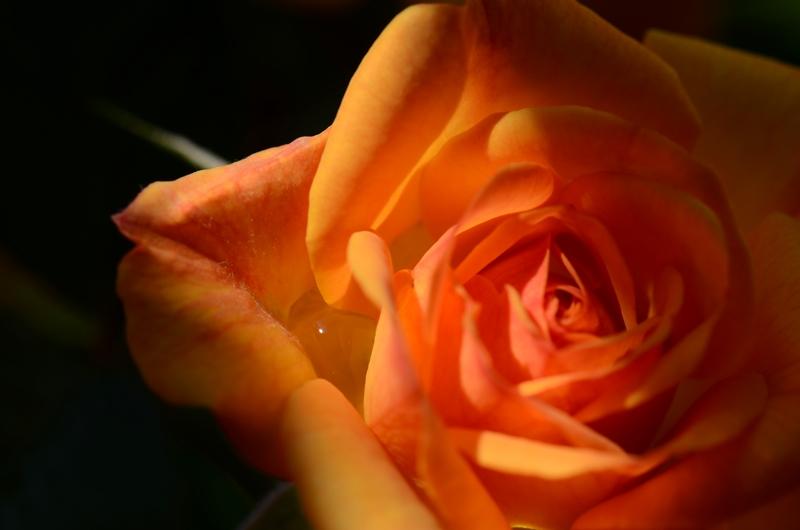 20140516 rose3