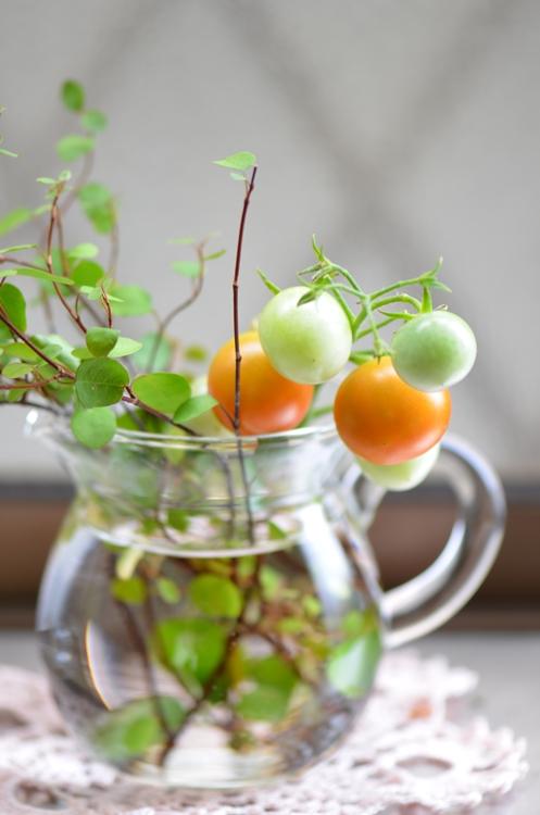 20140816 tomato